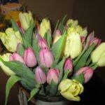 received 10206994385133008 Naturheilpraxis Aachen